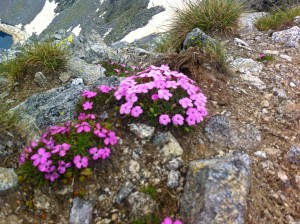 Musala peak 5